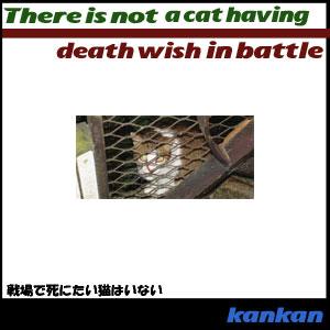 戦場で死にたい猫はいない