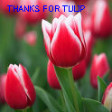 THANKS FOR TULIP