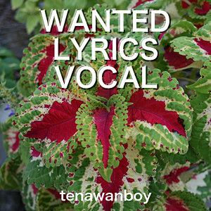 WANTED LYRICS VOCAL