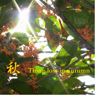 秋 Thing lost in autumn