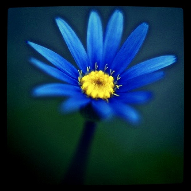Blue Blues