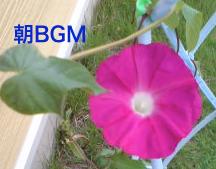 朝のBGM