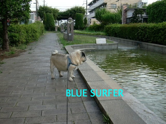 BLUE SURFER
