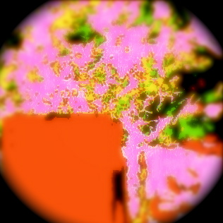 red rain2 桃色の黴