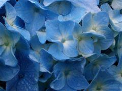 Blue in Rain