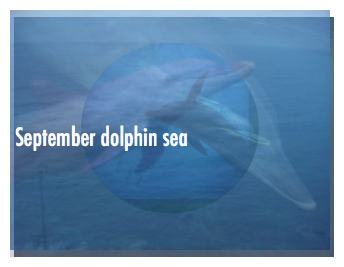 September dolphin sea