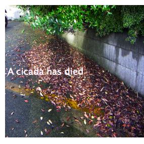 A cicada has died