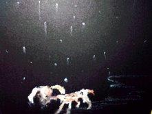 骨と犬と雨